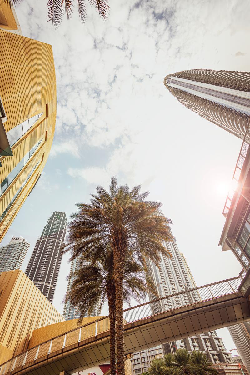 een foto van beneden naar boven met gebouwen en palmboom erop
