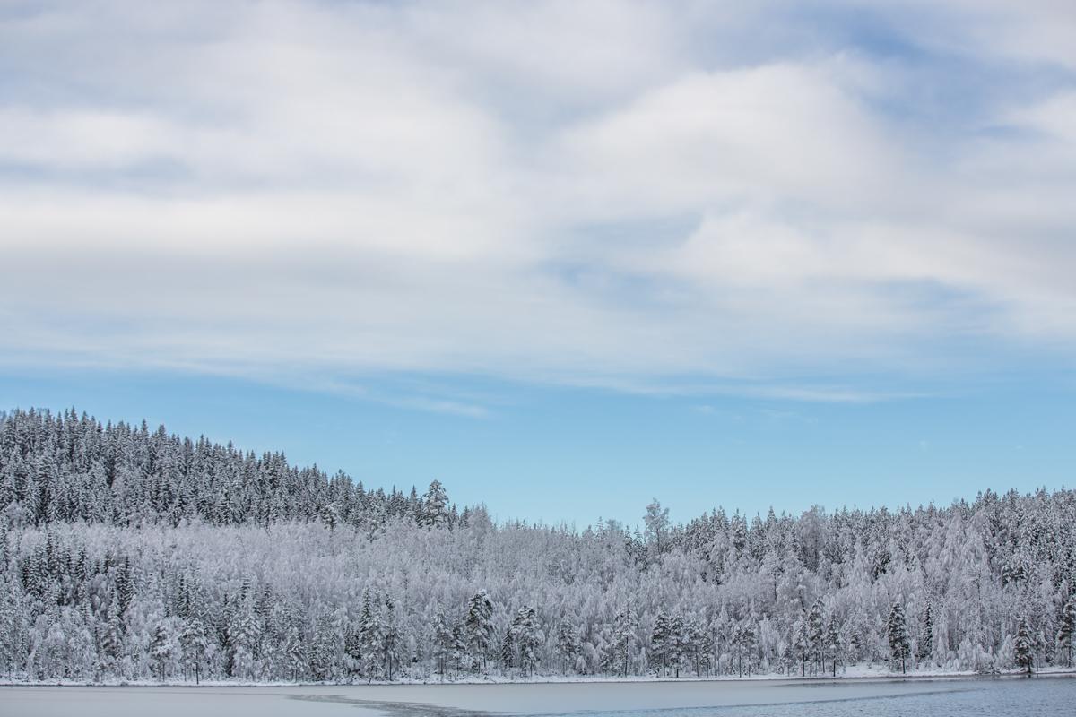 Foto van landschap in de winter