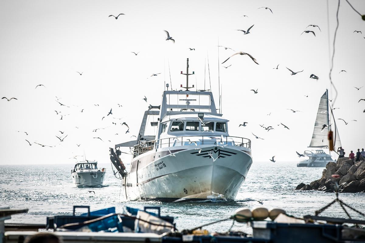 Boten die naar de haven varen met veel meeuwen in de lucht