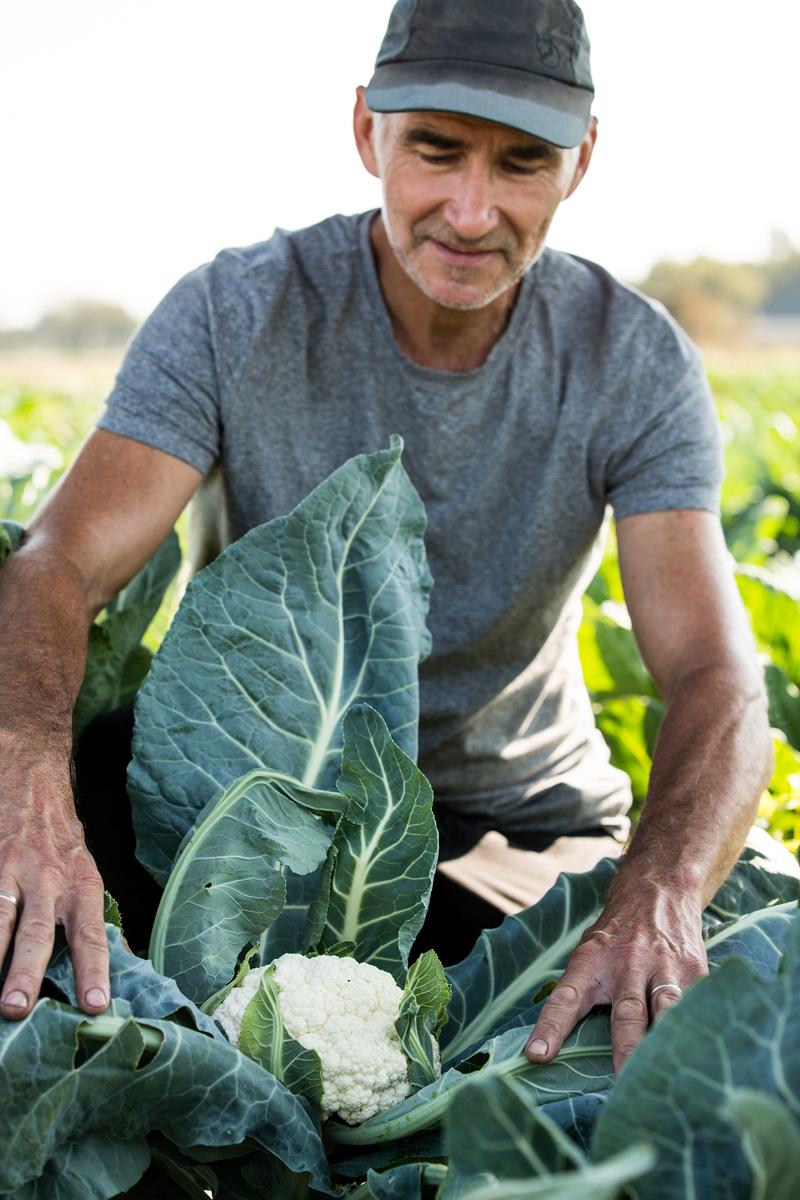 bloemkool-man-land-werken-boer
